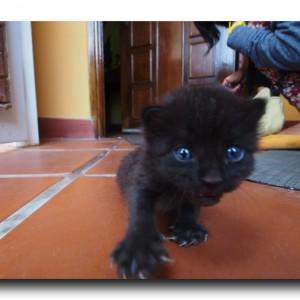 ラファエルと子猫。マラカイボにて。