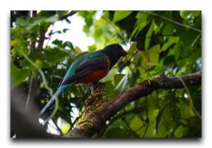 Costa Rica / コスタリカ