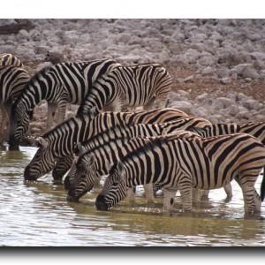 これはアフリカで一番かもしれない!大感動の野生動物劇場!!