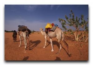 Mauritania / モーリタニア