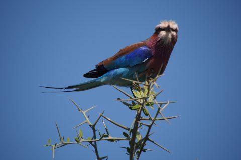世界で出会った野鳥図鑑